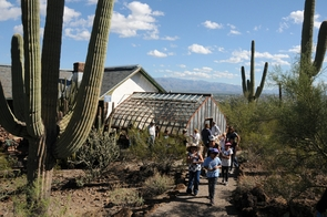 Students from Drachman Elementary School and staff of the Desert Laboratory at Tumamoc Hill conduct a cactus count. (Photo by Norma Jean Gargasz/UANews)