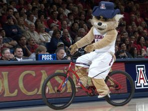 Wilbur and the Wildcats roll into Tulsa and the NCAA Tournament. (Photo courtesy of Arizona Athletics)