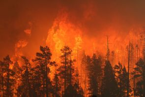 Arizona's Wallow Fire, the largest in Arizona's history, started on May 29 and was finally declared 100 percent contained on July 8. The forest fire, pictured here, burned more than 538,000 acres in northeastern Arizona and northwestern New Mexico.(Photo credit: U.S. Forest Service, Apache Sitgreaves National Forest)