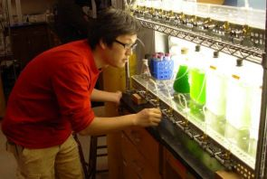(Click to enlarge) Takanori Hoshino checks on a sample of Chlamydonomas reinhardtii algae he is growing to study maximizing the production of hydrogen.
