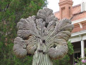 Carnegiea gigantean