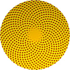 This image shows the pattern on the head of a sunflower as generated by a mathematical model of plant growth. (Credit: Matt Pennybacker/University of Arizona)
