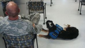 """I feel very strongly about taking care of our vets, especially when they return,"" said Rhiannon Miller, a UA psychology senior who has been training dogs and placing them with veterans who are living with post-traumatic stress disorder, or PTSD. (Photo courtesy of Operation Wolfhound)"