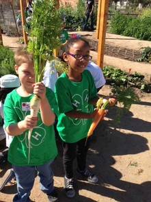 Kindergarten students pulled fresh carrots from the ground at Tucson Village Farm as part of an education program aimed to teach youth about healthy living. (Photo: Kirk Astroth)