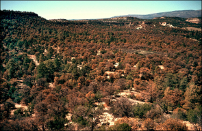 A red pinyon pine is a dead pinyon pine: Drought stress and higher temperatures already have resulted in massive tree die-offs along the western parts of North America. (Photo: Craig D. Allen/USGS)
