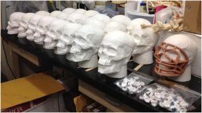 Plaster casts for Bone Camp