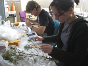 Solving a tree puzzle: Students measure tree parts for the research study. (Photo courtesy of Lisa Patrick Bentley)
