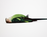 "Kejun Li's ""Carolina parakeet 1918"" is an archival digital print from the ""Causality"" series."