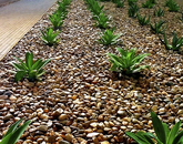 """""""These plants that were planted in the rock beds in the HSEB canyon were just little sprouts of green in 2012. When you see these same plants today, all the love and care that went into the building since its opening has grown these plants into the the miniature palm trees and desert scape that make the UA HSEB more lively."""" – Kristinmae Cardoza, manager of exams, Academic Affairs, College of Medicine – Phoenix"""
