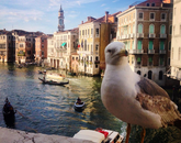 "Christy Dodd took ""Bird's Eye View"" during the Arizona in Italy program during the summer of 2015. ""I was walking back to the train station after spending the weekend in Venice when I decided to take a longer route to walk over the famous Rialto bridge that crosses the Grand Canal. I remember seeing the bird standing on the wall, unfazed by the crowd of people walking by."" (Photo: Christy Dodd)"