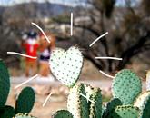 """""""The cactus is in the perfect shape of a heart! It set the mood as Wilbur and Wilma were taking a stroll around the UA South campus."""" – Aislinn Gonzalez, student employee, UA South"""