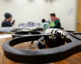 Raytheon provided drones to some Hack Arizona participants. (Photo: Amanda Cheromiah)