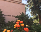 """""""I love to stop and smell the roses in the garden by the Forbes building!"""" – Lee Ann Hamilton, assistant director for health promotion and preventive services, Campus Health Service"""