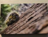 A photograph of a caterpillar.