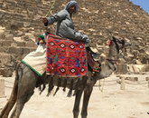 Senior Spanish major Isabel Miramontes snaps a photo of a man riding his camel around the Great Pyramids while she studied at the American University in Cairo.