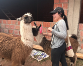 Paulina Cabrera gets acquainted with some friendly llamas as she provided water filters to a home during the Accelerated Public Health in Cusco program in Peru.