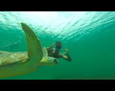 Senior Tyler Parmenter poses next to a sea turtle several hundred feet off the coast of Martinique during the Arizona in the French Caribbean program.