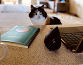 I'm a newly appointed postdoctoral researcher with the Blankinship Lab. I spent my first official day of work at my kitchen bench workstation! Here is a snap of my kitty, Pepper, who seems to love the fact that I'm working from home, and hasn't left my side. I think that engaging with our fur babies at this time is so important to minimize the social isolation. – Kirsten Ball, research specialist in the Department of Environmental Science