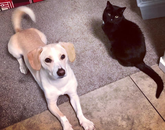 The dog is Cooper and the cat is Kit. :) – Kori Beck, student academic specialist in Academic Administration