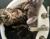 For some reason, Cleo (left) and Mouse like to sit in the sink when I get ready in the morning. – Pila Martinez, senior director for strategic communications, Office of University Communications