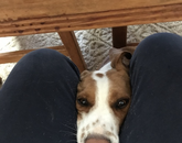 Buddy knows it's quitting time for me and dinnertime for him. So, he crawls under the table and puts his head up so I can see those sad eyes to let me know he's starving. Works every time. – Justine Collins, assistant to the director, School of Theatre, Film and Television