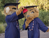 University mascots Wilbur and Wilma during filming for the virtual 2020 Commencement ceremony. (Photo: Chris Richards/University of Arizona)