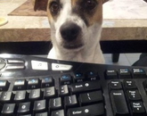 """Jasmine is eager to help me but insists to be paid in """"Scooby Snacks."""" I didn't have the heart to tell her that the store shelves were bare. – Wendy Epley, principal analyst in the Information Security Office"""
