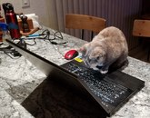 Writing procedures from home. Sugar the cat steps in to proofread because she doesn't trust spell check while Suzy the dog makes sure there's no tortilla chips wasted. – Bruce Hille, facility engineer, Richard F. Caris Mirror Lab