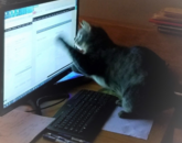 This is Thunder. He knows how to work a touch screen. – Tracey Hummel, senior website designer and developer in Research, Innovation and Impact