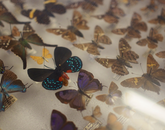 Many of the insects on display at the museum are similar to those housed within the UA's Insect Collection, which contains about 2 million specimens including tree bugs, grasshoppers, wasps, bees and butterflies.