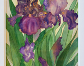 """""""Purple Irises"""" by Edee Cadin, family of Sean Cadin, senior business manager at the BIO5 Institute, won first place in the amateur category. (Photo by Kyle Mittan/University Communications)"""