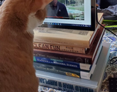 Glen the cat is paying close attention to President Robbins' video message to faculty and staff. – Sara Knepper, director of academic advising and certification officer, College of Education