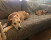 My furry friends enjoying their lunch break (i.e., nap time). They follow a strict schedule consisting mostly of snacks, naps and cuddles. The pup is Rey and the kitty is Jetson. – Kayleigh Kozyra, doctoral student and graduate assistant, College of Fine Arts