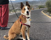 WFH with Cielo by my side. Walking and hiking for my physical and mental health in these times. – Jamie A. Lee, assistant professor in the School of Information