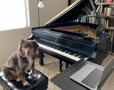 Teaching assistant (Echo) is ready to take over online piano lessons. – Fanya Lin, assistant professor in the School of Music