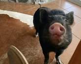 The last of my menagerie is a pig. His name is Doc. I was in a Zoom meeting this morning and he made his presence known. He cracks me up and brings much-needed levity to the workday. – Emily Litvack, science writer in Research, Innovation and Impact