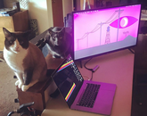 My cats are very confused about all of this, as they are accustomed to having the house to themselves most of the week. – Thom Martin, senior information technology support analyst in the College of Social and Behavioral Sciences