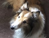 """My loving and conscientious """"friends with fur"""" remind me to stop, look around and be in the moment to appreciate life and to share it with others. Her name is Cosette. – James Naughton, employee assistance counselor in Life & Work Connections"""