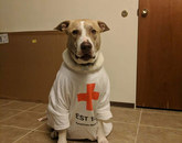 This is our dog Callista, dressed to support the health care workers who are fighting on the pandemic front lines. – Mithün Paul Panenghat, doctoral student, Department of Computer Science