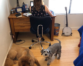 My husband (also a UA employee) captured the attached photo of my new co-workers, Gozer and Wembley, and me. I was setting up my next Zoom meeting and did not realize my dog posse had camped out behind me. – Erin Paradis, lecturer, Eller College of Management