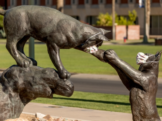 a statue of two wildcats playing while wearing cloth face masks