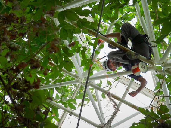 UA researcher Tyeen Taylor goes high into Biosphere 2 in his study of plant volatiles, the molecular compounds that are small enough to become a gas.