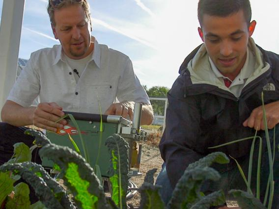 Researcher Greg Barron-Gafford and undergraduate research assistant Dan Blackett tend to the greens at the agrivoltaic test site st Biosphere 2.