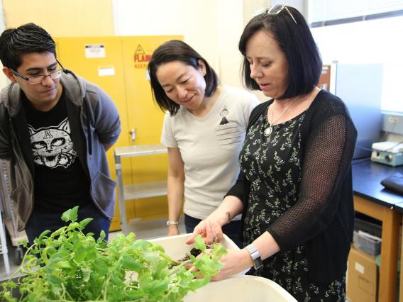 From left: Undergraduate student Luis Ruiz, doctoral student Ayako Kusakabe and professor Patricia Stock are have identified compounds derived from Photorhabdus, an insect pathogenic bacterium, that can potentially replace chemical pesticides.