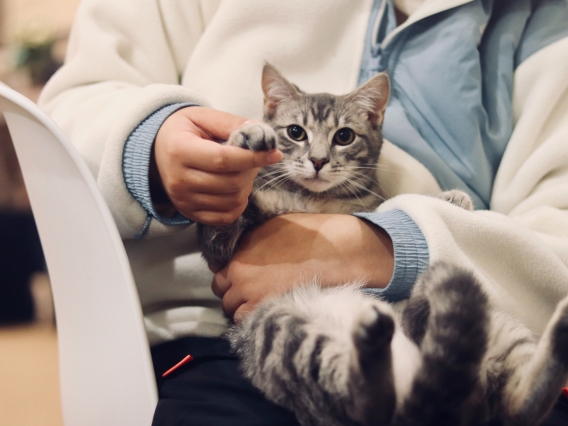 A cat and vet