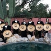 mariachi band posing near a pool