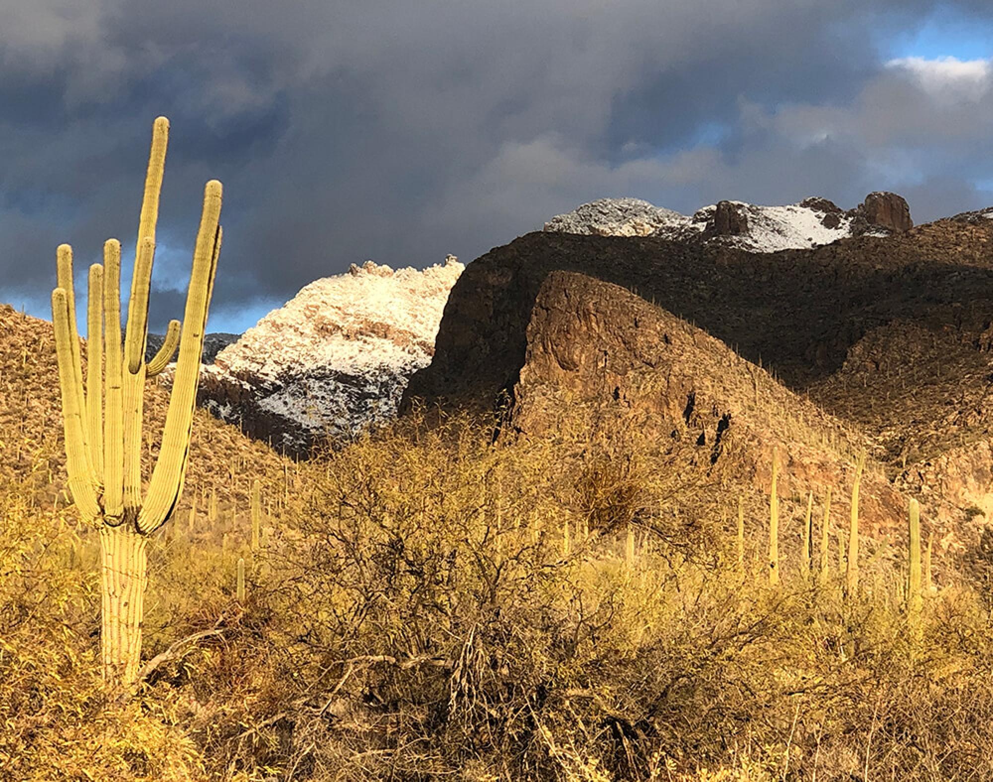 snowy mountains behind a desert