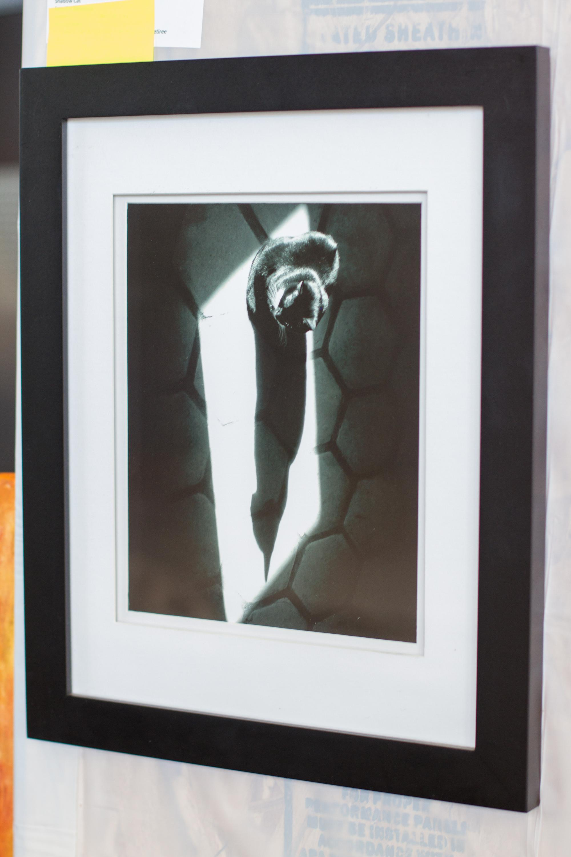 """Shadow Cat"" by Jennifer Downing, an immediate family member of an employee"