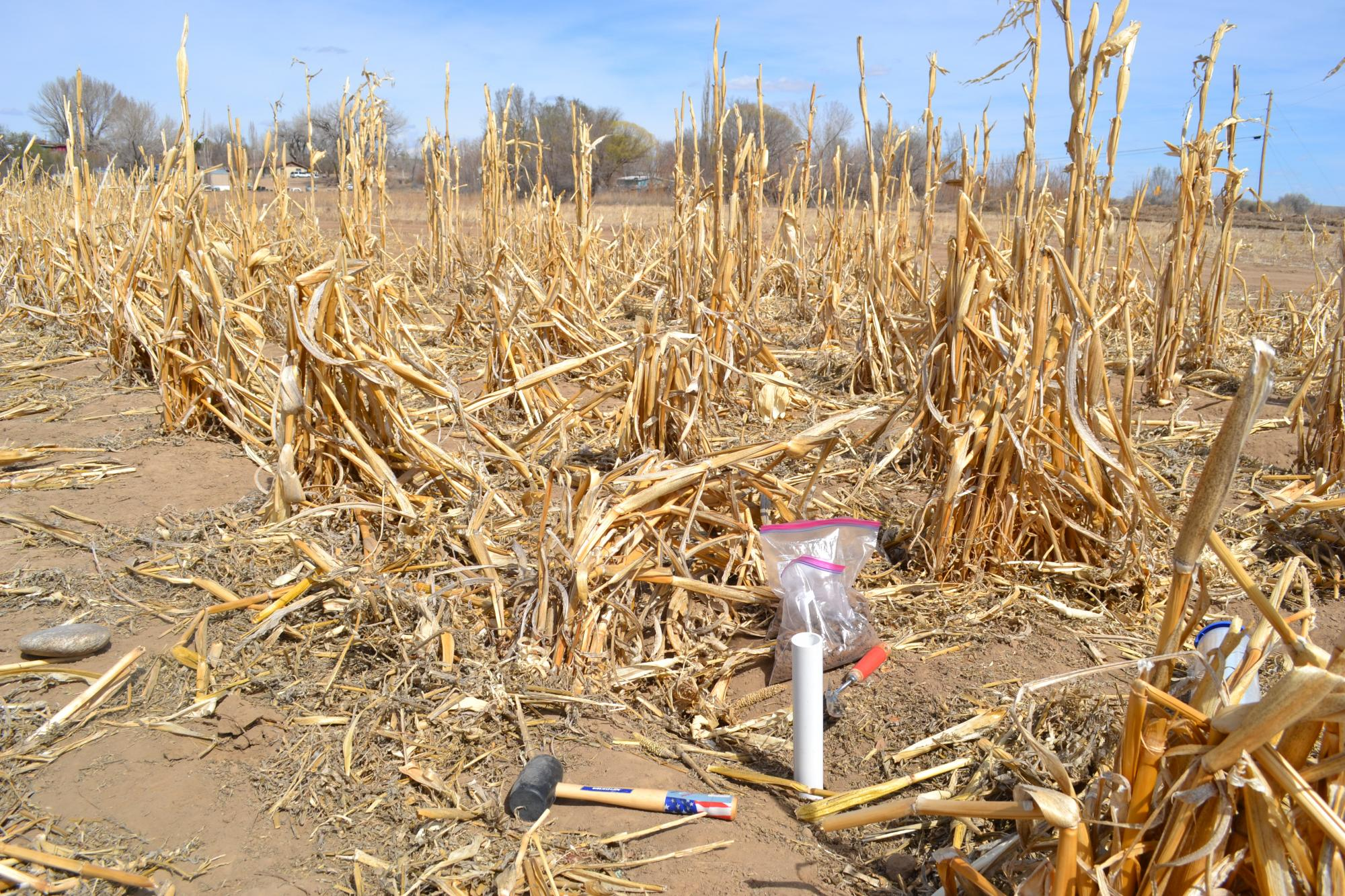 Core samples were taken from a cornfield as a result of the Gold King Mine Spill.