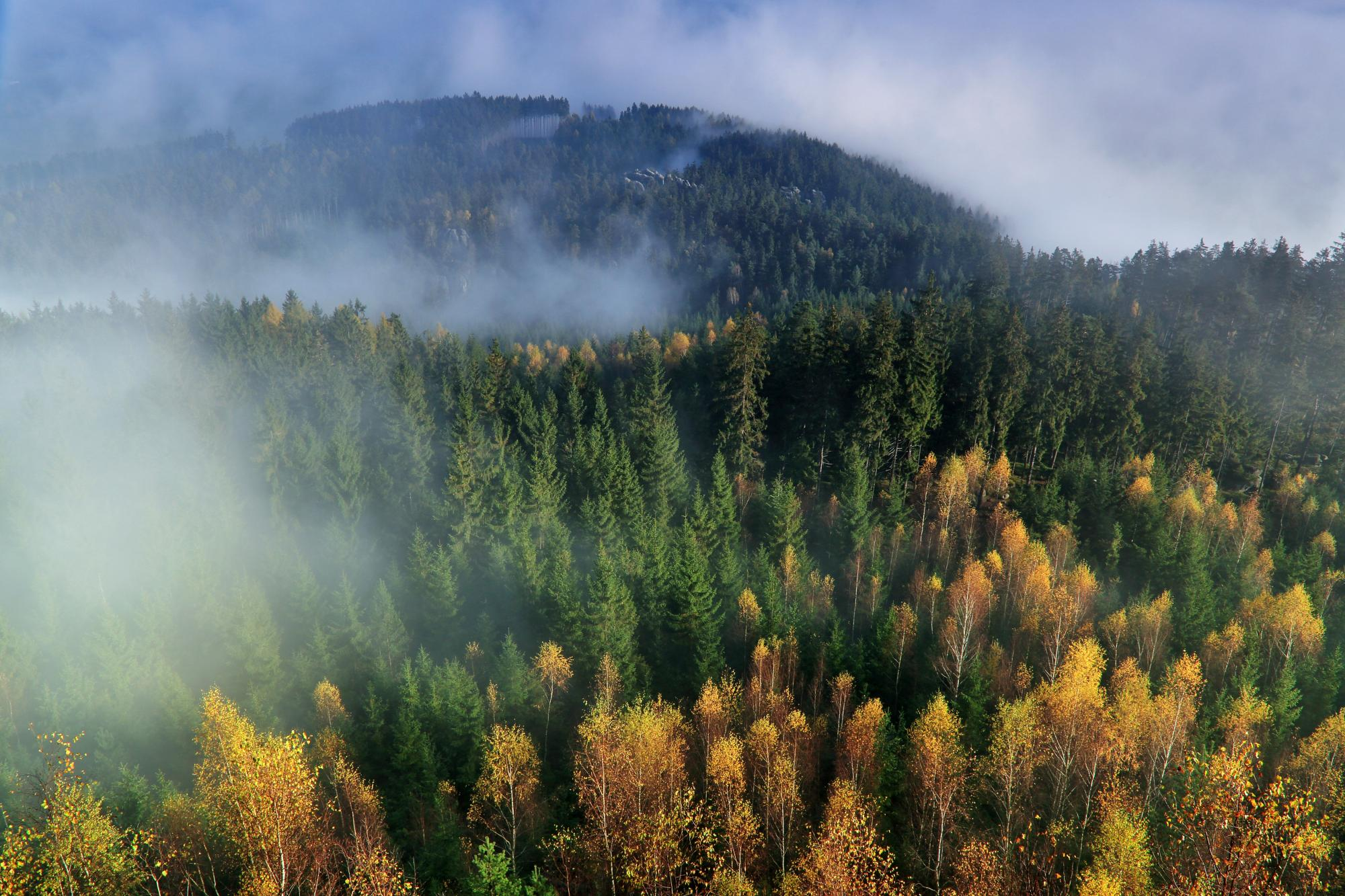 Efforts to thin forests in northern Arizona are worthy of funding because they save lives and money, says Shane Burgess, dean of the UA's College of Agriculture and Life Sciences.